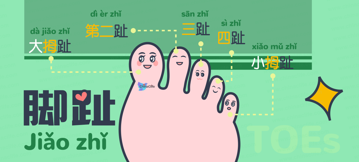Memorize Chinese Names of Toes
