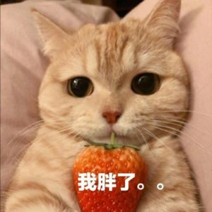Funny Chinese Memes Words and Sentences, Chinese Cat Memes, Be Fat Memes